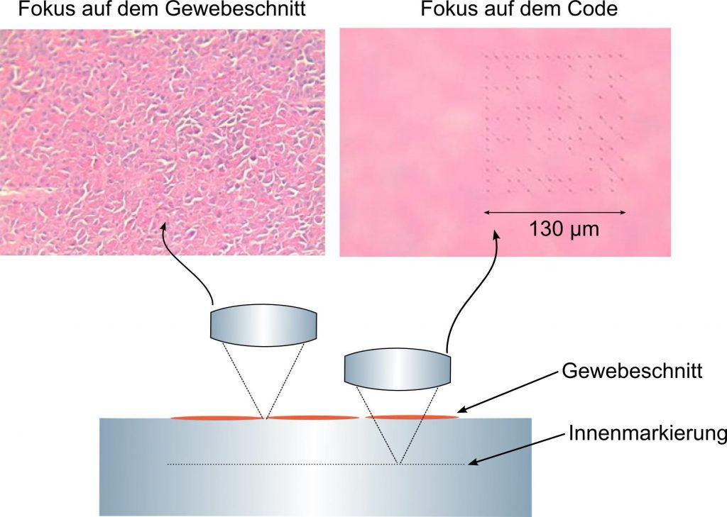 Schema und Beispiele von Mikrocodes in Objekttrtägern